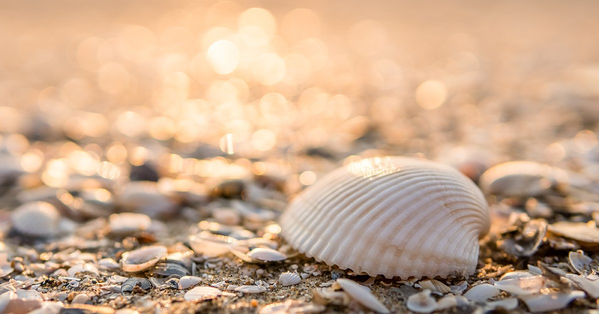 Sea Shells at Amelia Island