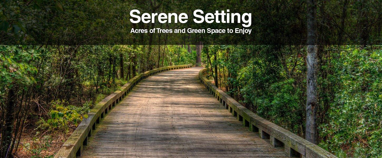 Serene Setting